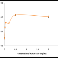 Recombinant-Human-BAFF-R-TNFRSF13C-Bioactivity-Data-Z100015