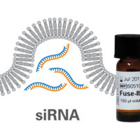 fuse-it-sirna