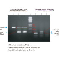 mycoplasma kit1-01