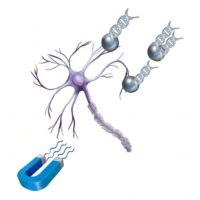 neuromag-neuron-transfection-reagent