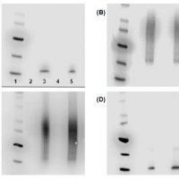 Exosome_marker_antibodies[1]