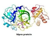 Mpro protein