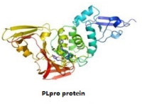 PLpro protein