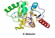 X domain