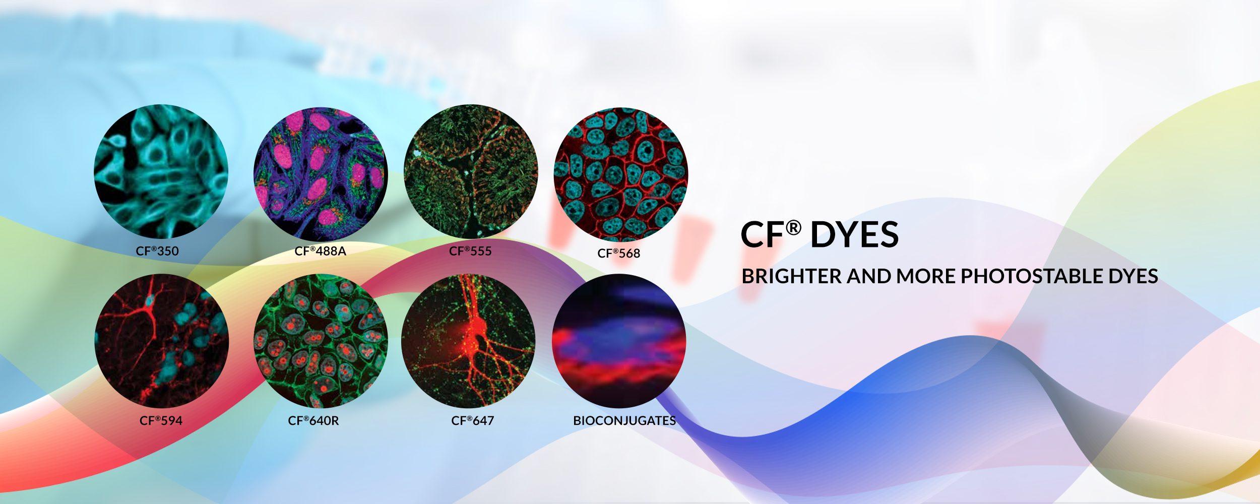 CF dyes, Brighter and more photostable dyes