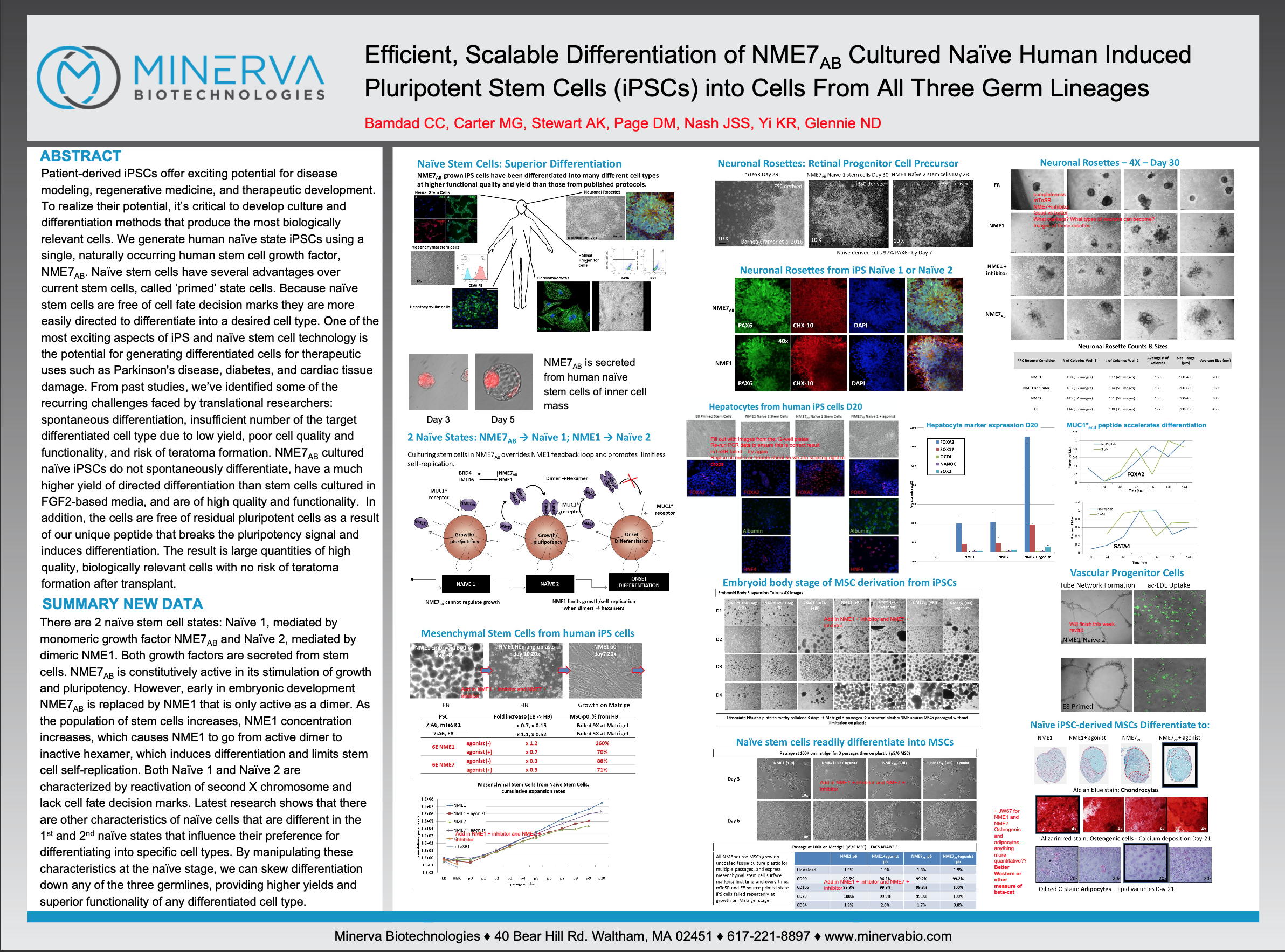 Efficient, Scalable Differentiation of NME7AB Cultured Naive Human Induced Pluripotent Stem Cells (iPSCs) into Cells From All Three Germ Lineages