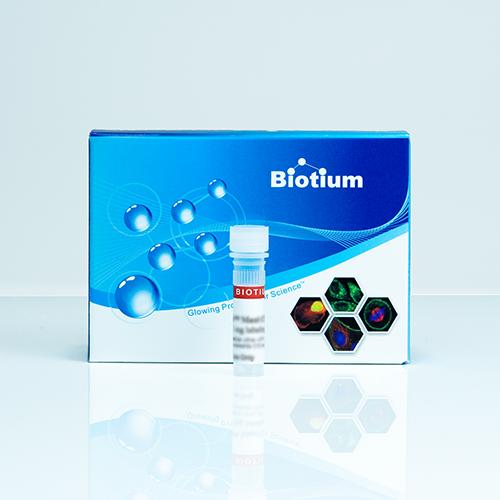 EvaGreen dye binds to dsDNA